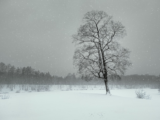 Blizzard in the winter park. tree under snow cover. minimalistic winter landscape.