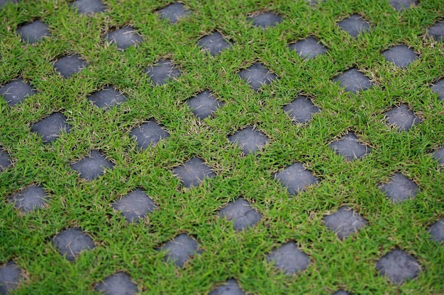 Block paving on the lawn in the garden