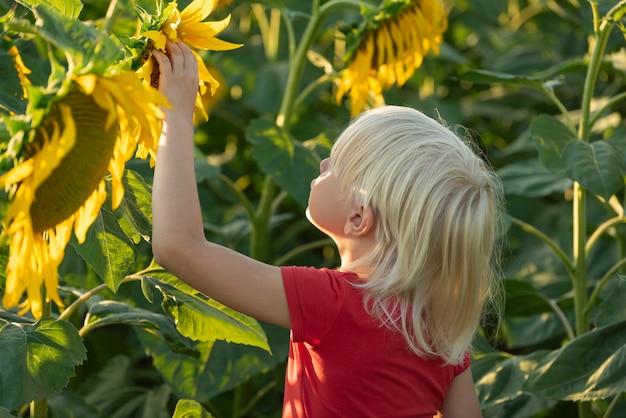 Белокурый ребенок трогает подсолнух
