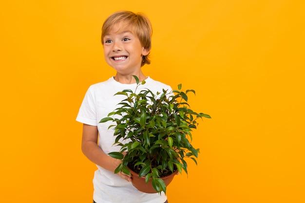 Белокурый европейский мальчик с листовым горшком на желтой стене