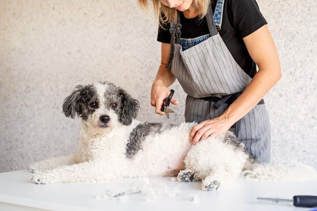 Блондинка женщина, ухаживающая за собакой дома