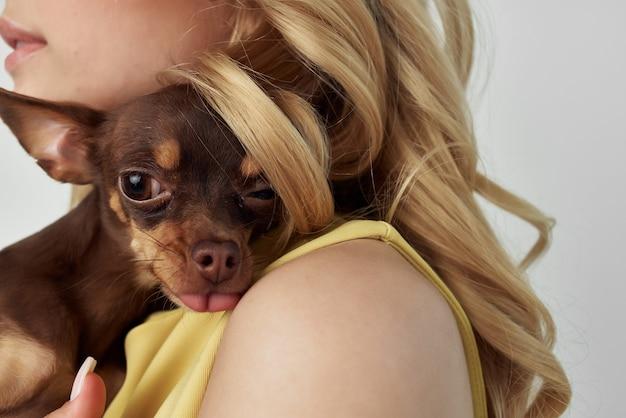 金髪のファッショナブルな純血種の犬の孤立した背景