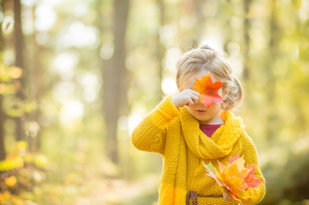 Blonde girl hides her face behind a maple leaf. autumn sunny forest.autumn, season, childhood and people concept. cute kid, toddler with autumnnal leaves.
