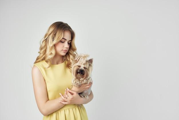 黄色のドレスを着た金髪の小さな犬の孤立した背景をお楽しみください