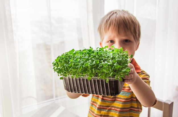 A blonde little boy is watching the growth of microgreens. little gardener, gardening and planting concept