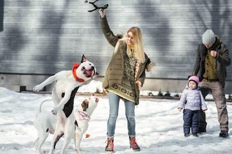 Blonde woman plays with two American bulldogs in a winter park
