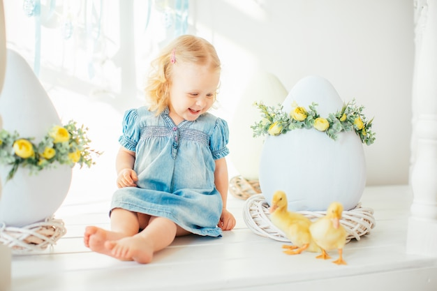 Blondel little girl in blue dress and two ponytales playing with yellow fluffy ducklings and laughing. easter, spring.