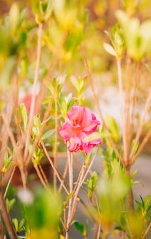 Bloom pink flower on twig in summer time