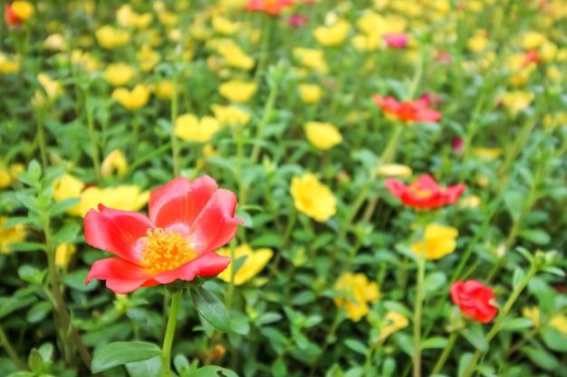 咲くbloomの花は、春と夏の季節を完璧に表しています。