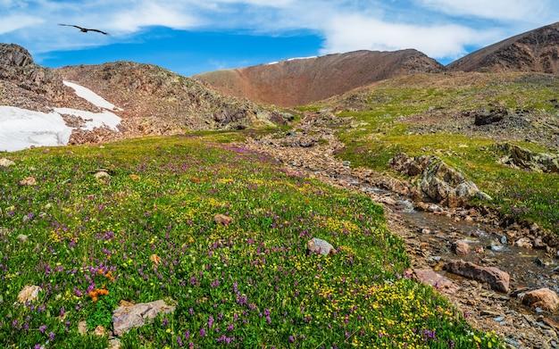 피는 고산 초원. 청명한 계류가 녹색의 고지대를 통해 흐릅니다. 강이 있는 그림 같은 산 여름 풍경입니다.