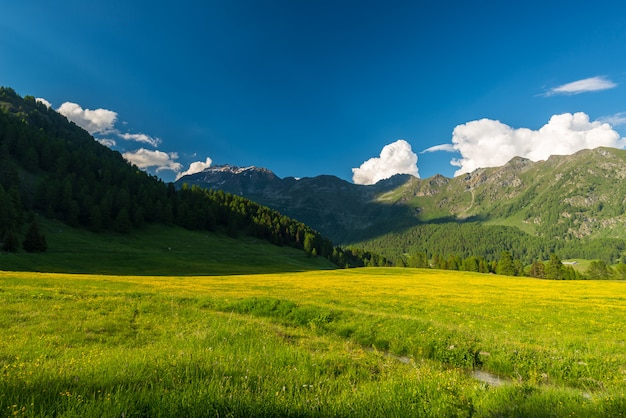 Blooming alpine meadow and lush green woodland high altitude mountain range at sunset