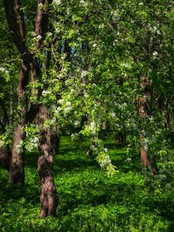 木の上に咲くリンゴの花、暗い日陰の緑の背景。垂直方向のビュー。