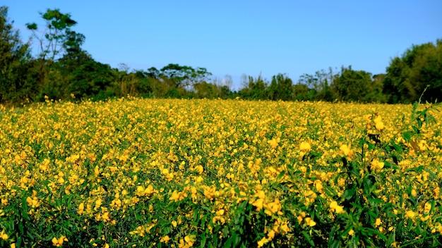 많은 목적을 위해 아름다운 노란 꽃 바다의 아름다운 배경 요소