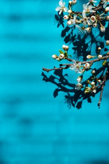 Цветущая ветка и тень сквозь жалюзи