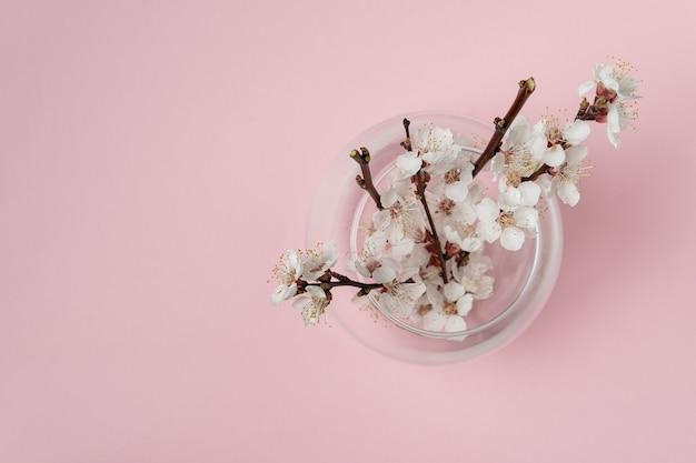 Цветущие ветви абрикосового дерева в вазе. белые цветы на розовом. вид сверху.