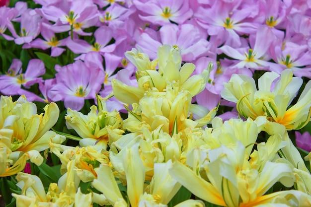 온실에서 분홍색과 노란색 꽃의 꽃 봉오리