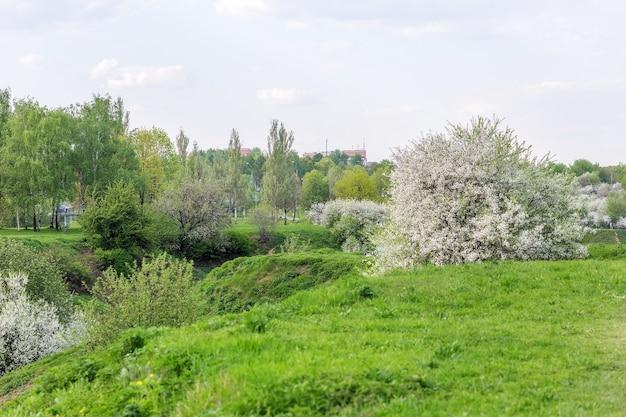 5月の春に都市公園の丘に咲く桜とリンゴの果樹園。