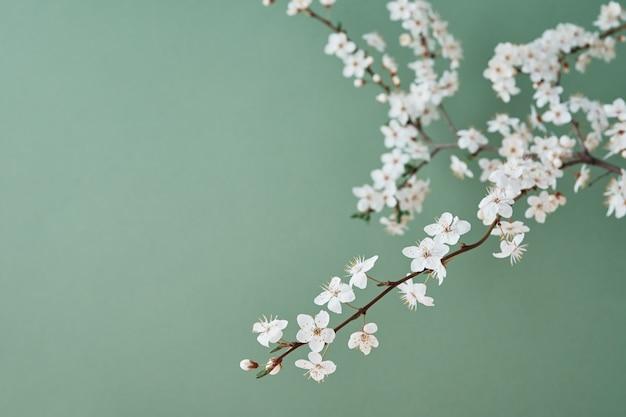 コピースペース春の創造的なコンセプトと緑の背景に咲く桜の枝