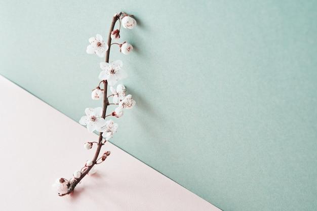 コピースペースとパステル背景に咲く桜の枝。春の時間。クリエイティブコンセプト