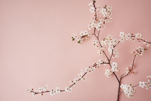 コピースペース春の創造的なコンセプトとピンクの背景に咲く桜の枝