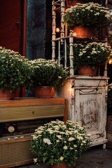 ヴィンテージ家具を背景にインテリアに咲く菊