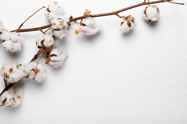 Blooming cotton branch on table