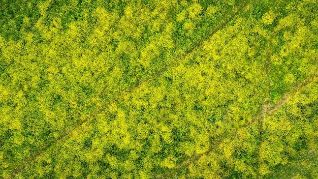 타이어 트랙이 있는 노란색 로켓 식물의 꽃이 만발한 필드