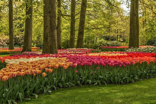 Цветущие цветы в парке кёкенхоф