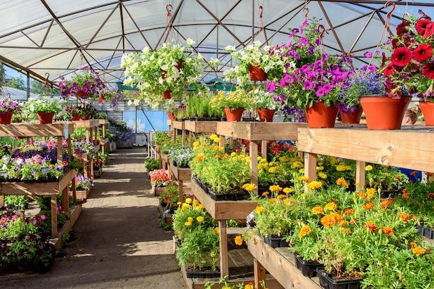 鉢植えや園芸用品センターの棚に咲く花。