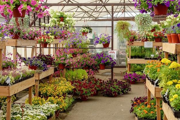 園芸用品センターの鉢や棚に咲く花