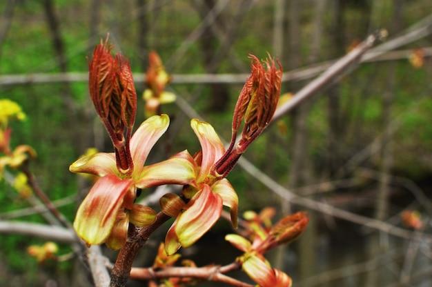 Цветущие цветы дерева. цветы дерева на размытом фоне. фон, текстура.