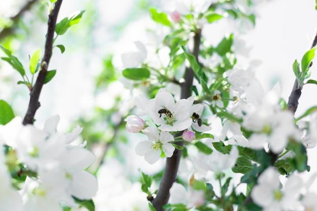 Цветущие цветы на ветвях деревьев