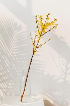 Blooming forsythia flowers
