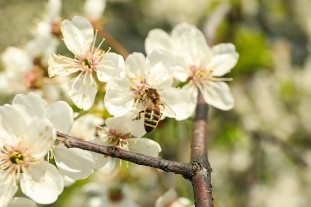 봄에 피는 정원, 피는 봄 나무. 화창한 봄날