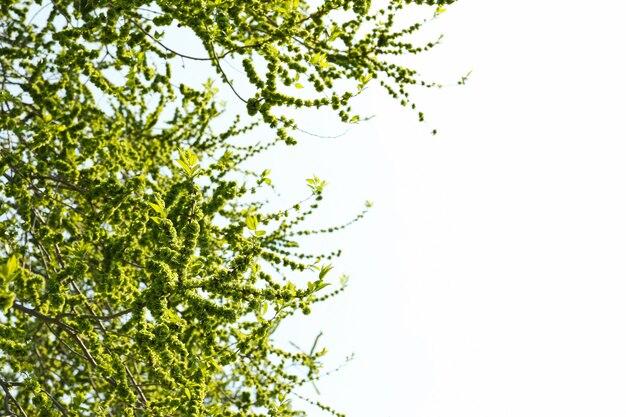 Цветущие сады весной, цветущие весной деревья. солнечный весенний день