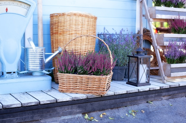 Blooming heather, wicker baskets and garden tool in backyard home in autumn.