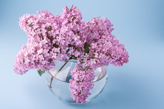 Blooming lilac bouquet in sphere transparent vase on blue
