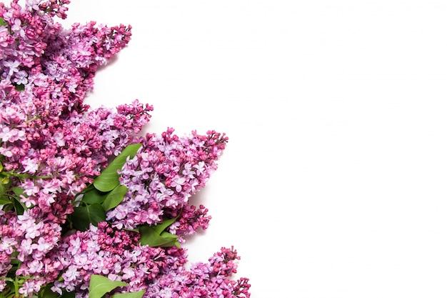 Цветущие сиреневые цветы, изолированные на белом