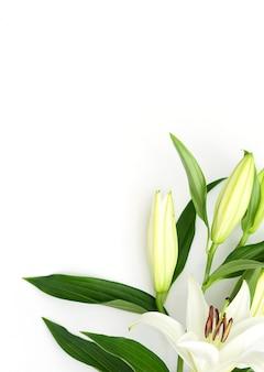흰색 바탕에 피는 백합 꽃