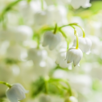 개화 은방울꽃 꽃 자연 꽃 배경