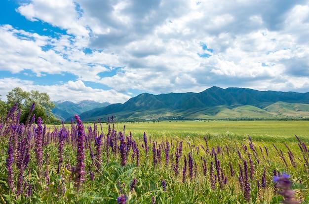 高山を背景に咲く薬草。
