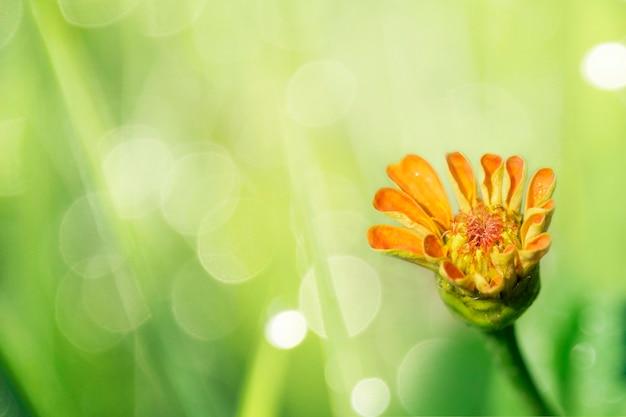 Blooming orange flower in a garden macro shot