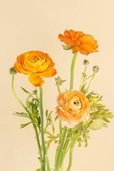 咲くオレンジ色のラナンキュラスの花