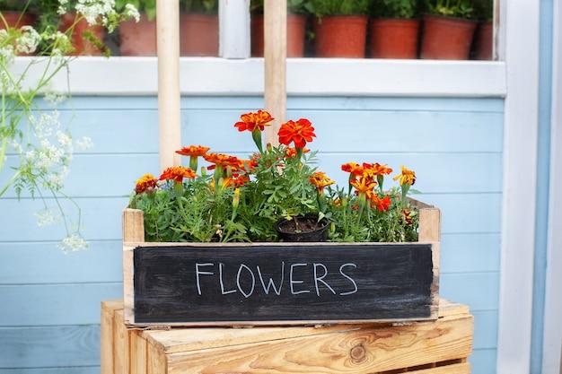 베란다에 있는 화분에 피는 오렌지색 타게테스 꽃 화분에 심은 식물 재배