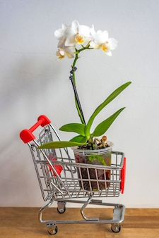 Blooming orchid plant stands in toy shopping cart on floor