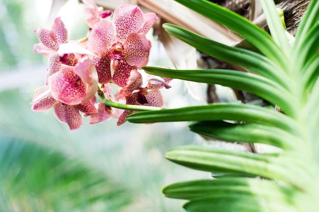 피는 분홍색 난초와 열대 식물 배경