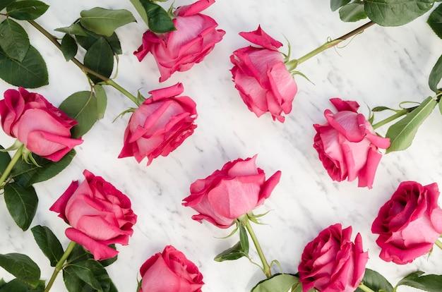 Blooming pink roses arrangement flat lay