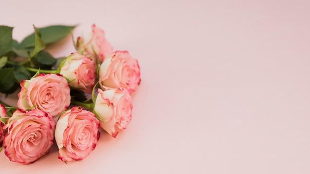 Blooming pink roses copy space