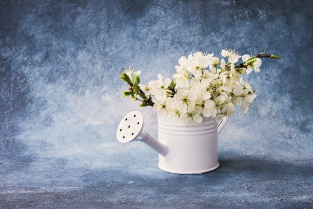 Blooming plum branch in white watering can on blue background. copy space