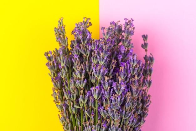 Blooming purple lavender